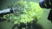 Glass sponge reefs and marine protected areas