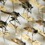 Insect specimens on pin board