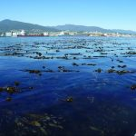Kelp beds seen from canoe