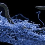 A nematode (eukaryote) in a biofilm of microorganisms.