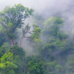 rainforest in the mist