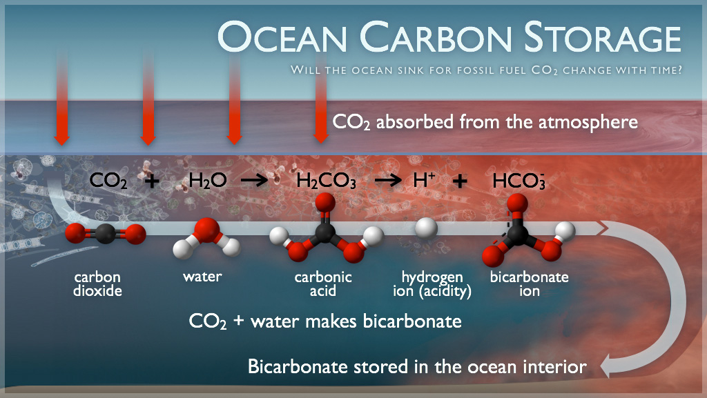 How the oceans store carbon - NOAA/PMEL infographic