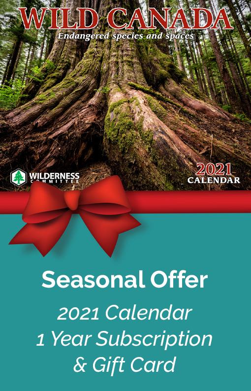 Calendar Offer
