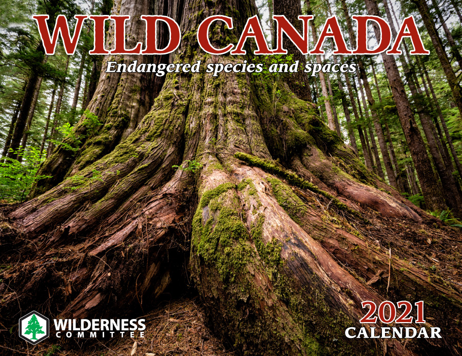 2021 Wild Canada calendar cover