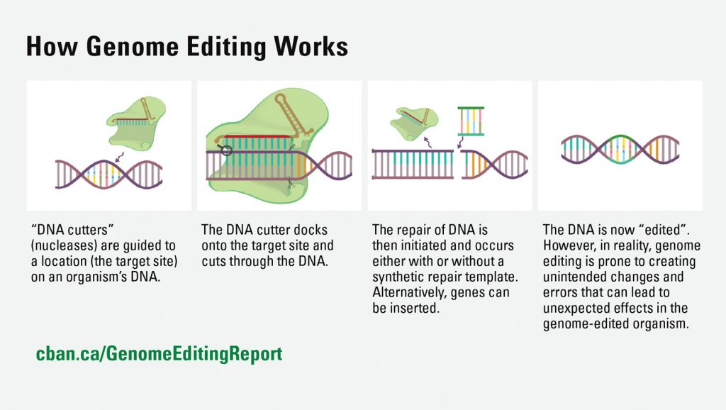 How genome editing works