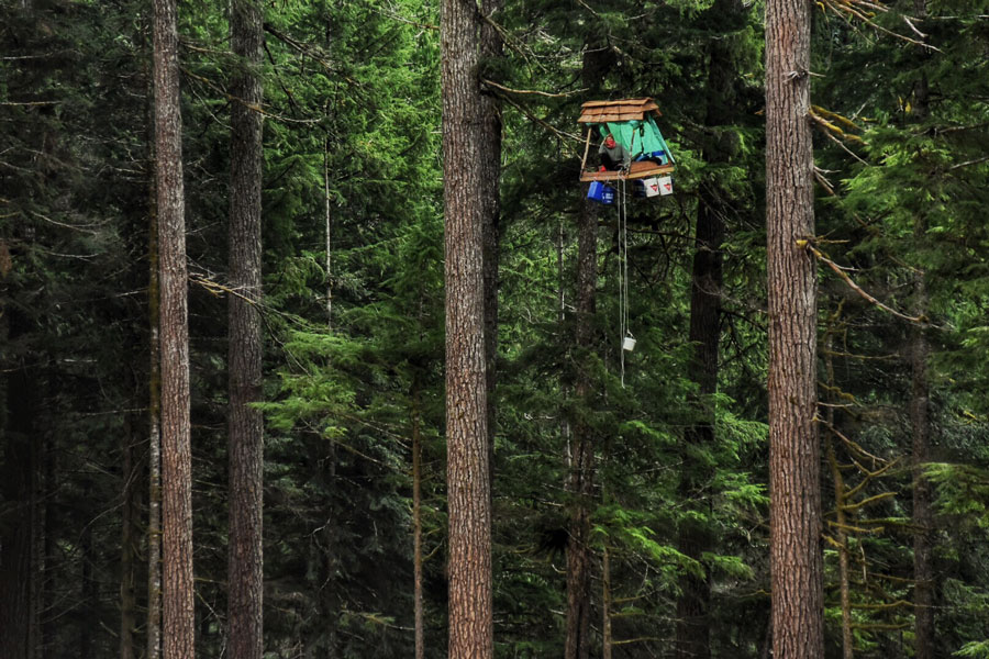 Tree-sitting protesters suspended over 100 feet